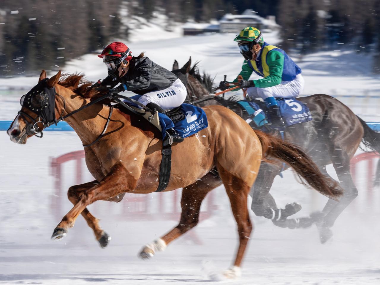 競走馬レース
